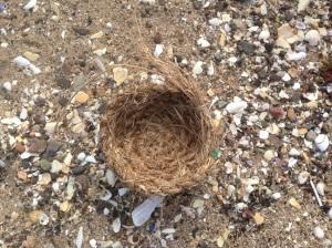 Largo Bay basket and shells